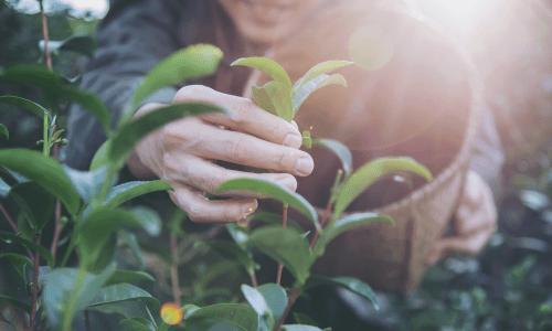 Qué es la agricultura biodinámica - certificado Demeter