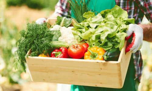 iva envases fiados almacen de fruta y verdura oax software